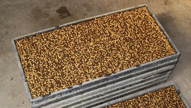 「種まき 稲」の画像検索結果